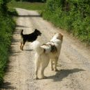 Žanka in mešanec Muri na domači poti poleti 06