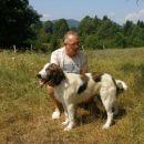 Belfi stara 9 mesecev, pase ovce v Knežji Lipi