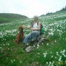 Narcise, pot Golica - Rožce