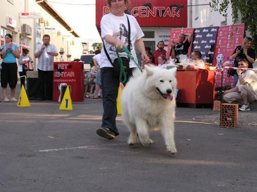 Izložba pasa bez rodovnice 25.6.2006. Zg - foto