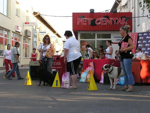 Izložba pasa bez rodovnice 25.6.2006. Zg - foto povečava