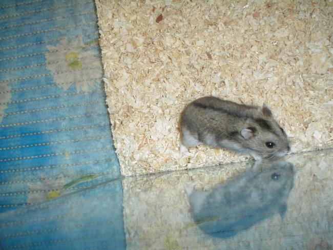 Moj hrček - foto povečava