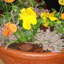 z delavnice o zasaditvi in aranžiranju cvetja