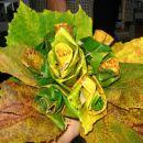 hit letošnje jeseni / šopek iz listja