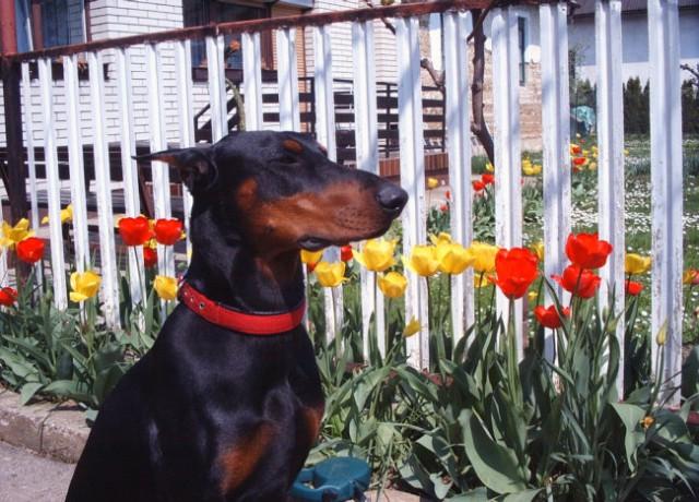 Blink april 2006 - star 18 mesecev - foto
