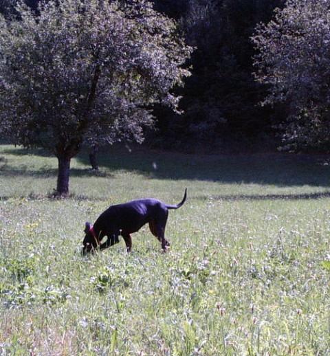 Blink in Lana - julij 2006 - foto