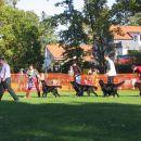 BIS Breeding Group - Black Wind of Varaždin