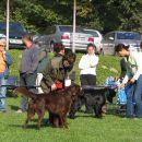 Josh Black Wind of Varaždin - CAC, Club Winner, BIS Working dog