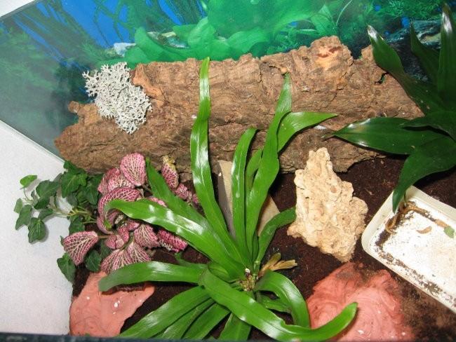 Terarij krokodiljega gekona