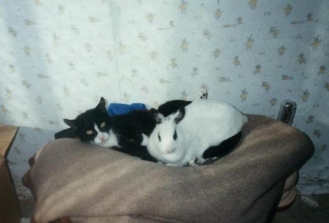 Mevki in Davidov zajček sta se imela zelo rada.Skupaj sta jedla,norela in spala.
