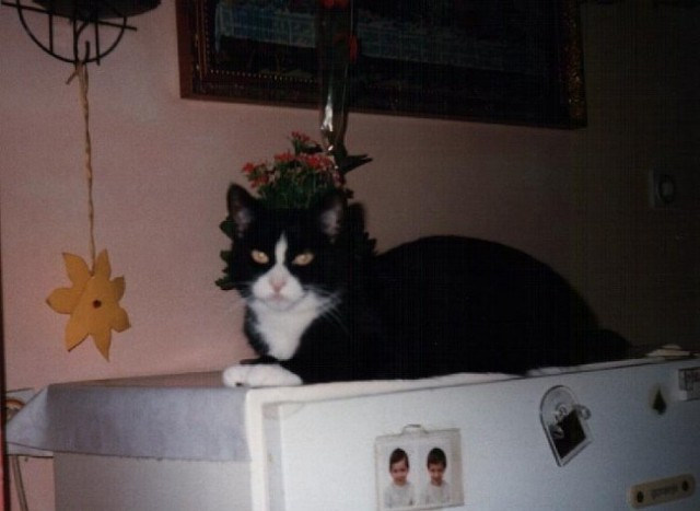 Mevkica čaka v kuhinji na svoje kosilo.