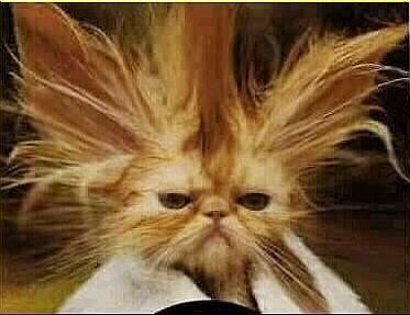 Kaj so ti frizerji naredili z menoj? No ja nova moda pač.