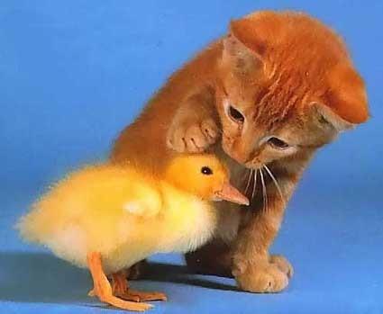 Ne boj se moj mali prijateljček.