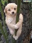 Kdo me hoče rešiti iz tega debla?