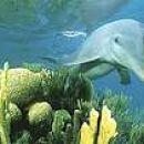Prijatelj ljudi in morskih živalic.