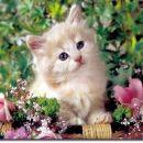 Mar nisem lepa med rožami?