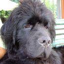 Bruno - 8.mesecev (8.months old)