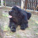 Bruno - 10 mesecev (10 months old)
