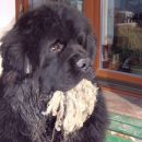Bruno - December 2006