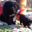 Bruno in Zeus