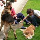 pa sem spoznala nove pasje člane moje družine