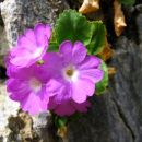 Flora in favna.