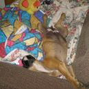 ni ga čez spanje na svojem kavču