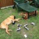 če spiješ preveč piva  postaneš zaspan