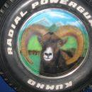 muflon /airbrush / kolo jeepa