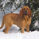Hel uživa v zimskih radostih