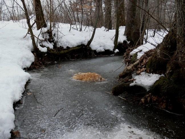 Zima-barvna - foto povečava