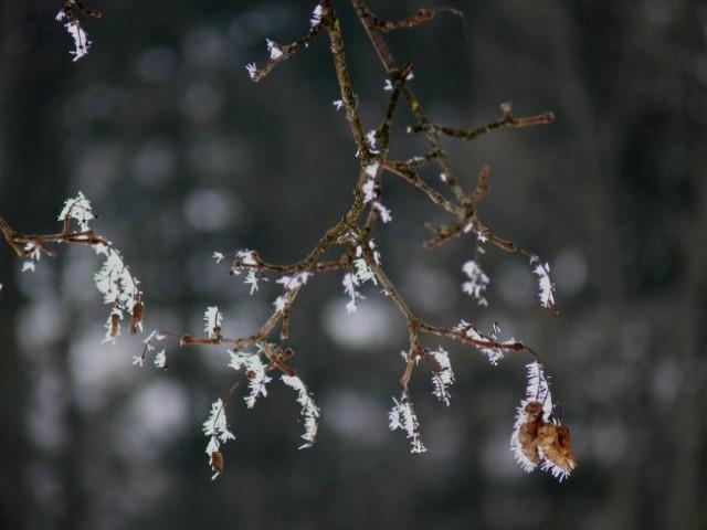 Zima-barvna - foto