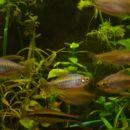 novi akvarij