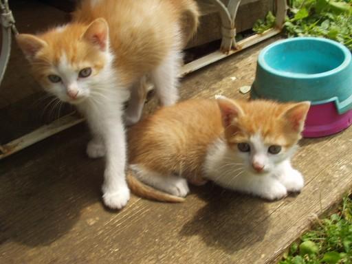 Mačke - foto