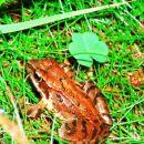 žabica,ki smo jo srečali...