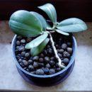 orhideja v glinoporju, upam da bo kaj iz nje
