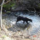 V lokalnem potoku
