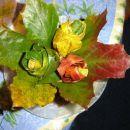 Jesenski šopek iz javorjevih listov.