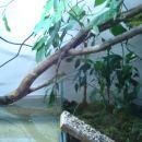 Jap, je v dveh nadstropjih, s pravimi rastlinami in s 70 litri vode za plavanje :)