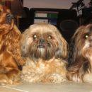 Miša, Tashi & Pipi