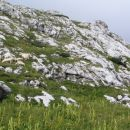 ovčke nad Kokrškim sedlom ... uživajo!