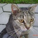 Moja mačka Miša***