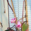 prvi cvetki