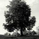 Samotno drevo