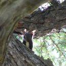 Pogumna veverica, zjutraj 12.7.
