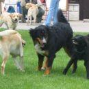 Rina, Zara in labradorci