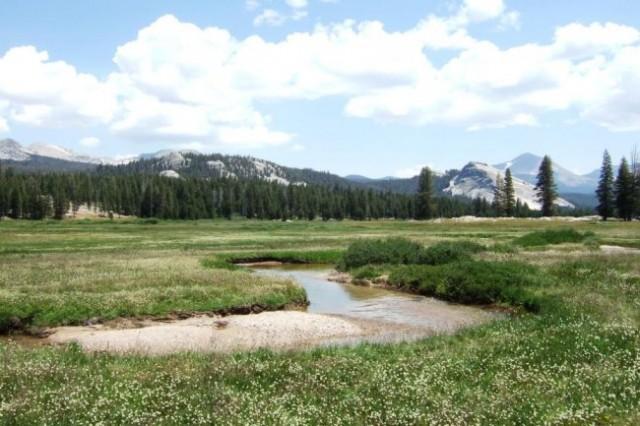 Toulomne Meadows