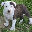 moi doggy