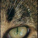 Očke od Mucota