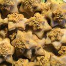 lešnikovo-cimetove zvezdice